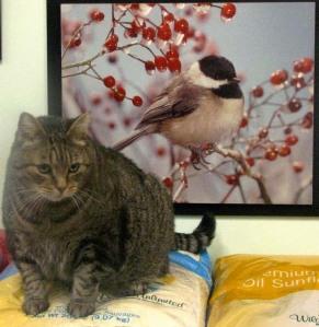 Tigger the cat at Wild Birds Unlimited
